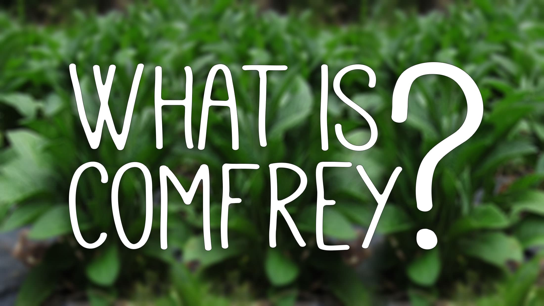 What is comfrey and why should you grow it?