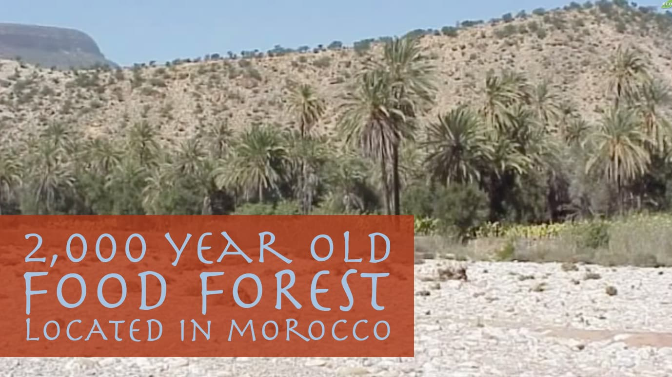 2,000 Year Old Food Forest in Morocco