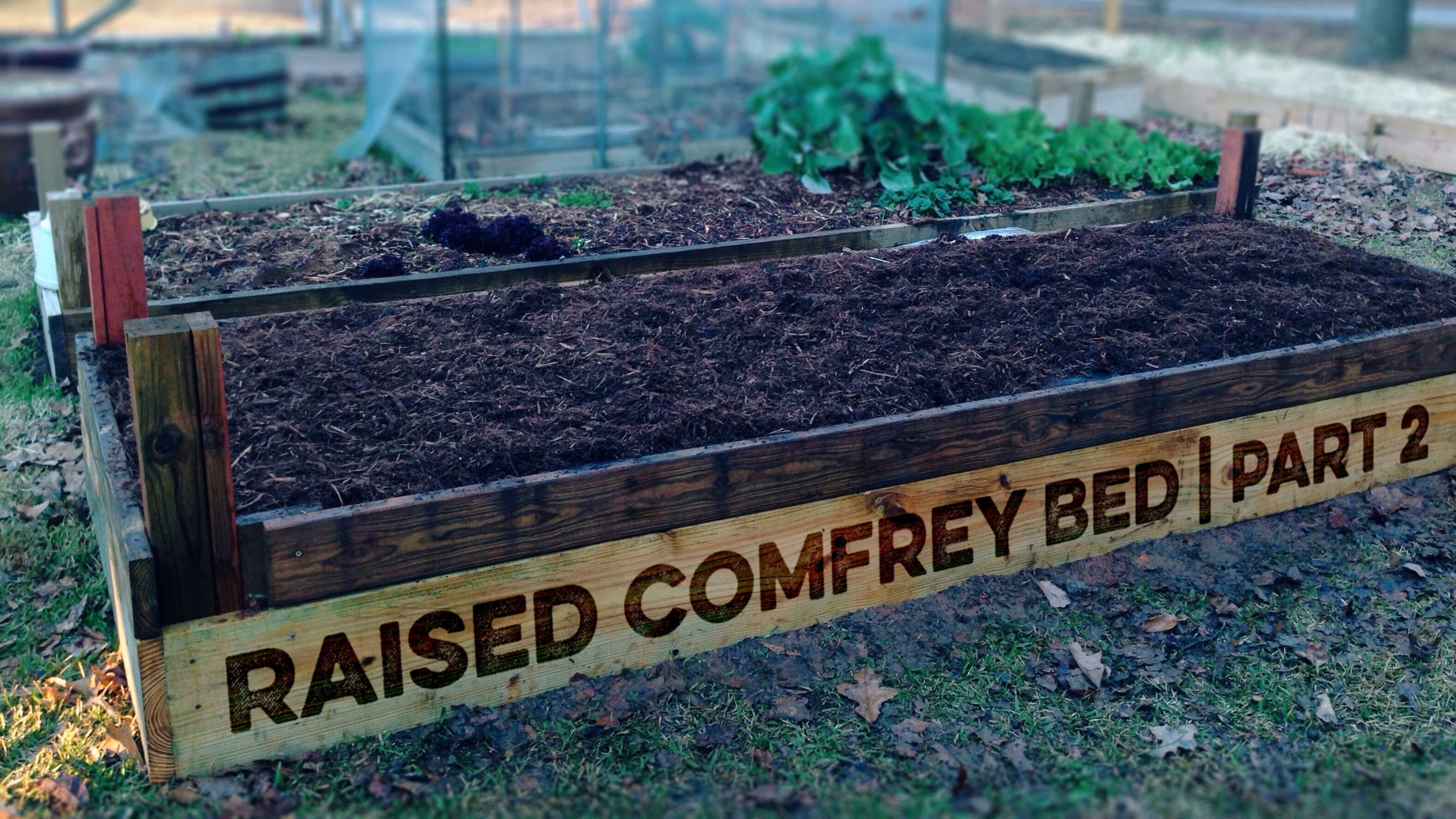 Raised Comfrey Bed Part 2 Hero Image