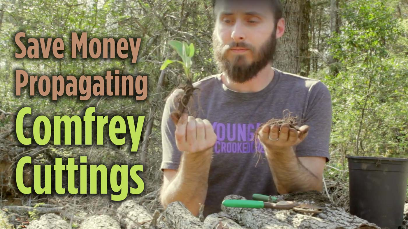 Save Money Propagating Comfrey Cuttings